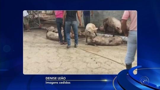 'Quando abrimos a porta, os porcos estavam tudo no quintal', diz mulher em casa atingida por caminhão