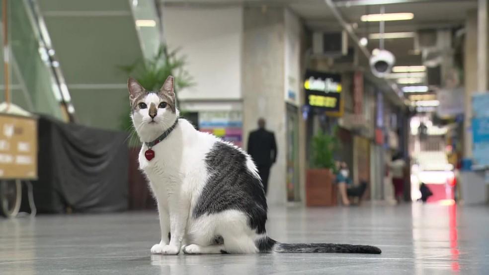 Gato Rubinho ganha o direito de circular por galeria em Copacabana, na Zona Sul do Rio — Foto: Reprodução / TV Globo
