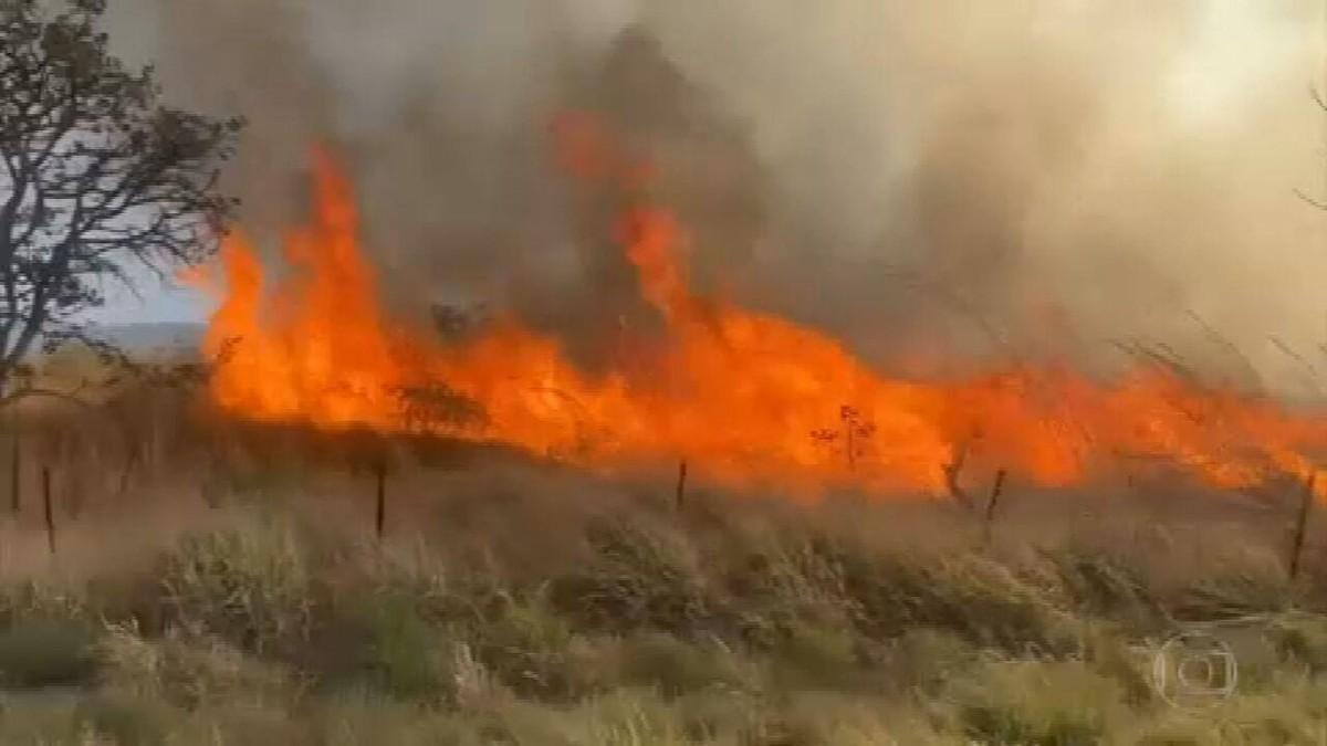 Brigadistas de outros estados vão reforçar combate ao incêndio na Chapada dos Veadeiros