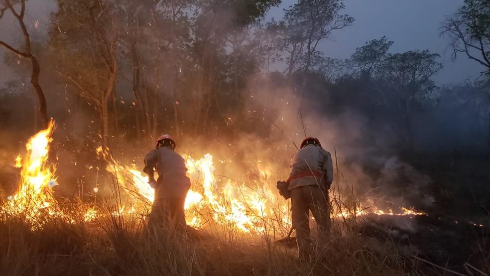 Chamas avançam em áreas de mata no Pantanal — Foto: João Paulo Gonçalves/Corpo de Bombeiros - MT