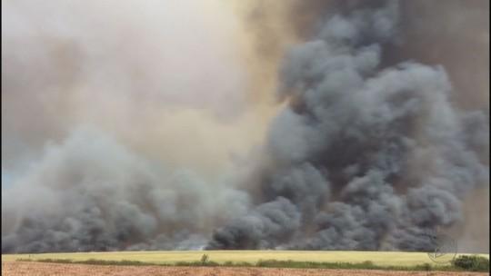Com 22 focos por dia, MP apura ação criminosa de incêndios na região de Ribeirão Preto