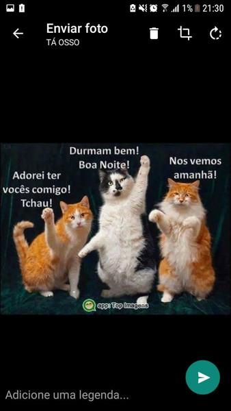 Bom Dia Whatsapp Download Techtudo