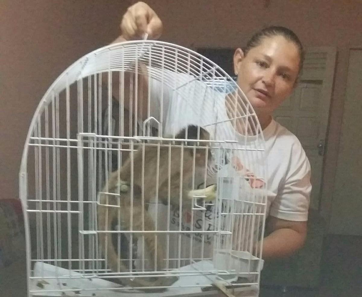Macaco vítima de maus-tratos é resgatado em Cajazeiras, no Sertão da Paraíba