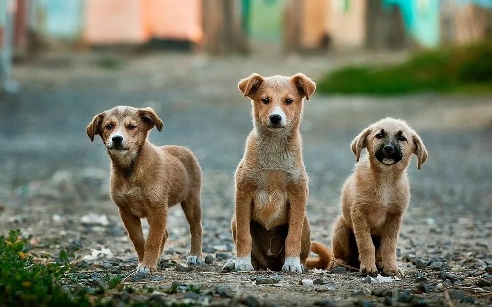 Câmara Municipal aprova projeto de lei que obriga a prestação de socorro a animais atropelados em Presidente Prudente
