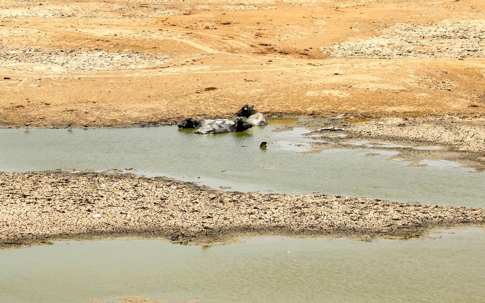 Búfalos indianos descansam em um lago seco para se refrescar em um dia quente de verão perto de Ajmer em 2 de junho de 2019. As temperaturas passaram dos 50°C no norte da Índia. — Foto: Himanshu Sharma/AFP