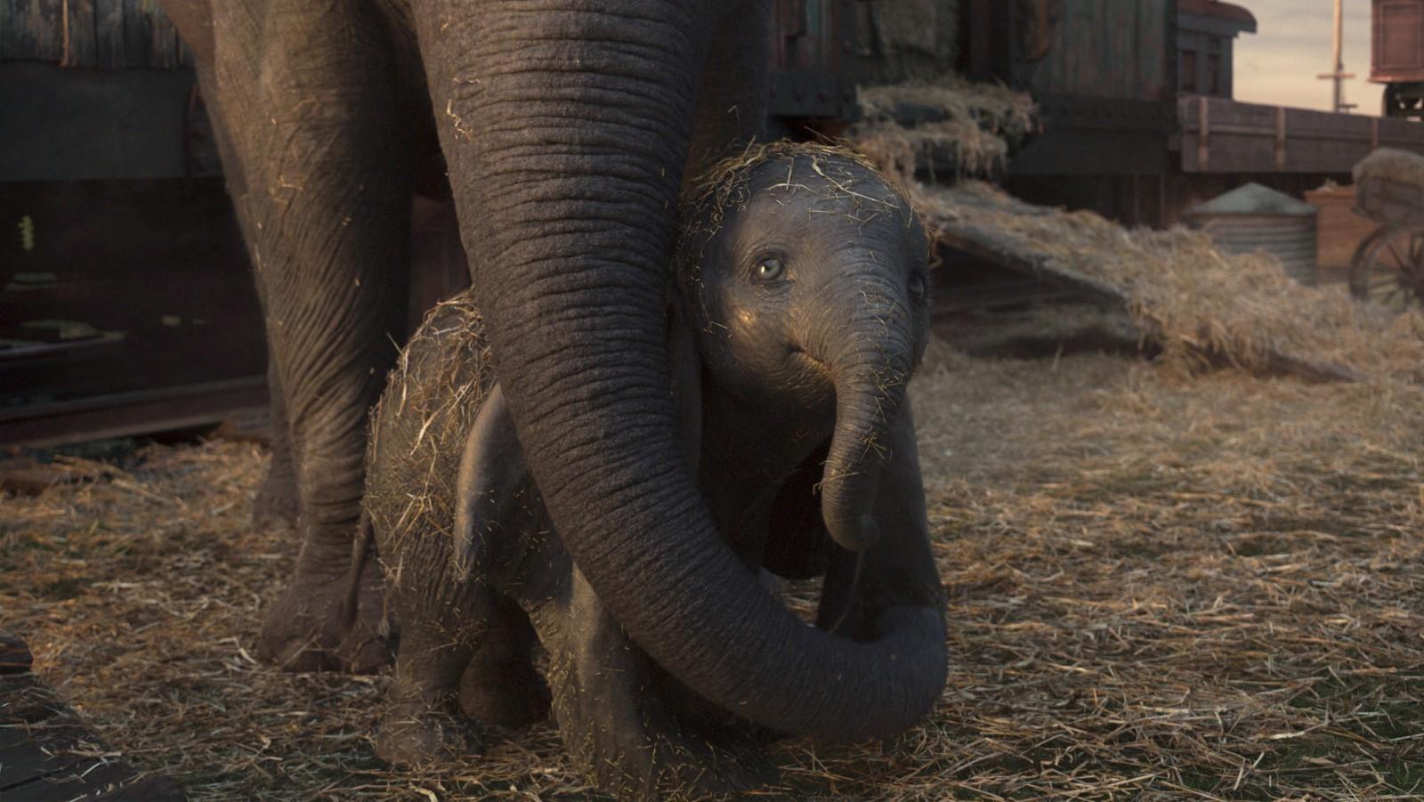 Sra. Jumbo protege Dumbo no live-action dirigido por Tim Burton (Foto: Divulgação)