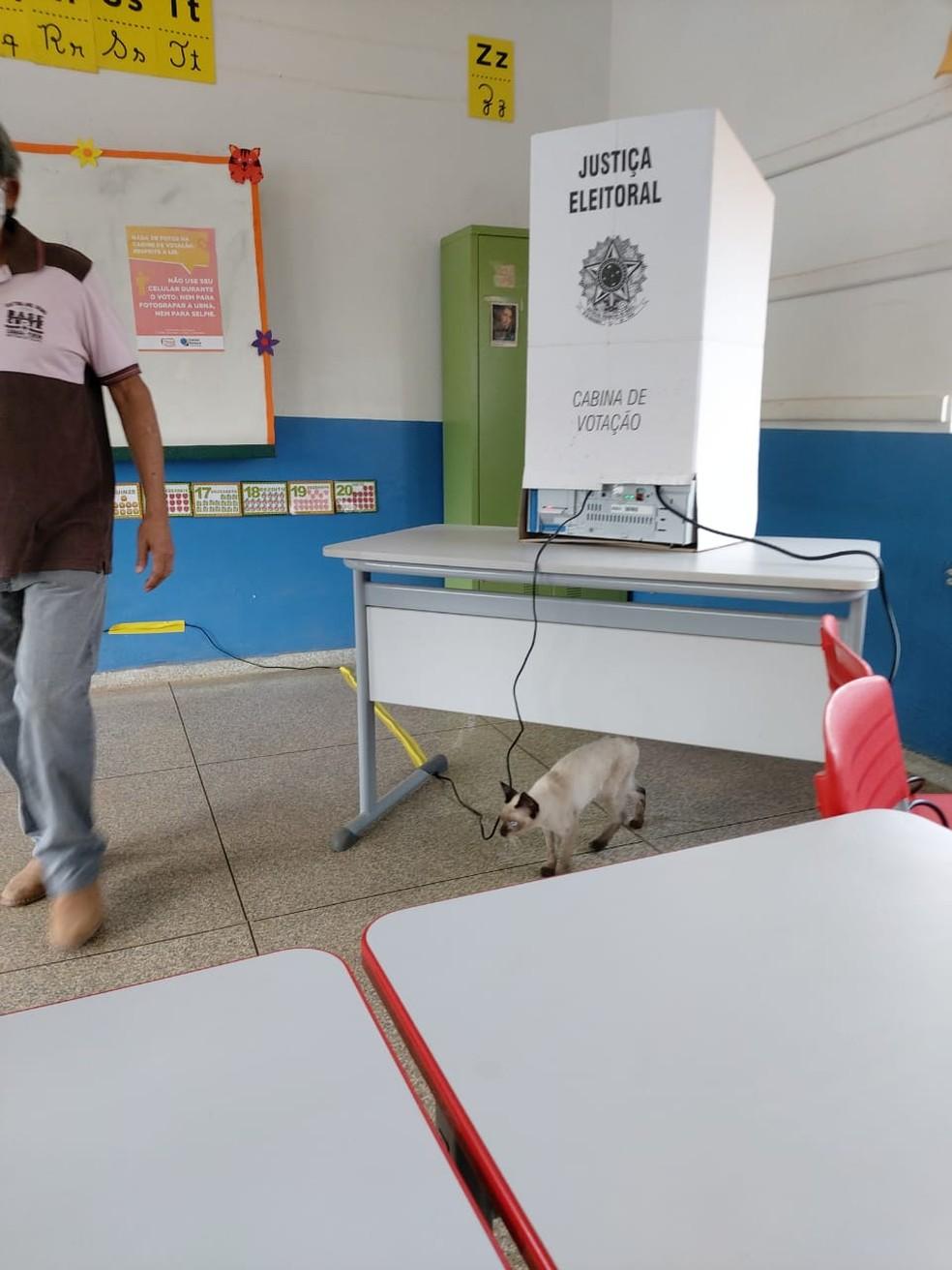 Babalu acompanhou dono na cabine de votação em escola de Porto Velho neste domingo (29).  — Foto: Mariane Rocha Moraes/Arquivo pessoal