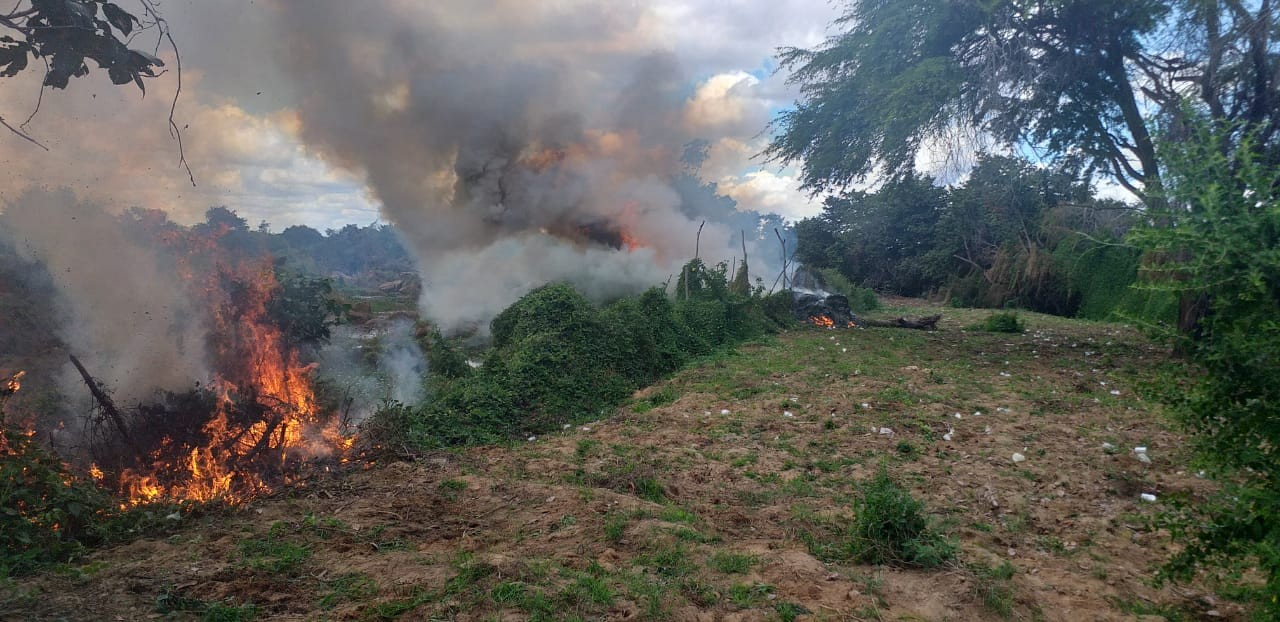 Polícia erradica quase 12 mil pés de maconha na Zona Rural de Orocó - Notícias - Plantão Diário