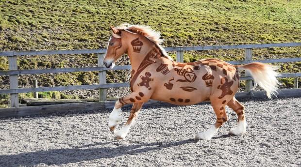 Um dos cavalos tosados por Melody (Foto: Divulgação)