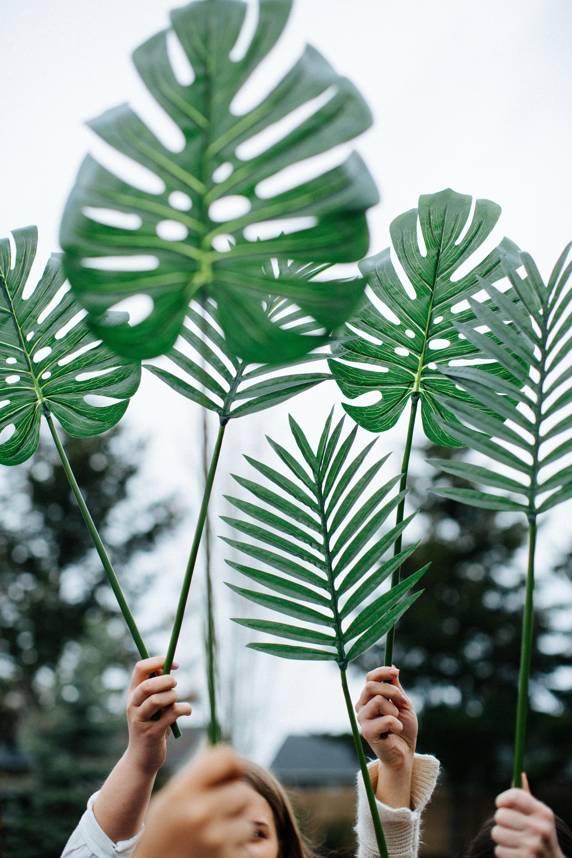 Crie hábitos sustentáveis! (Foto: divulgação)