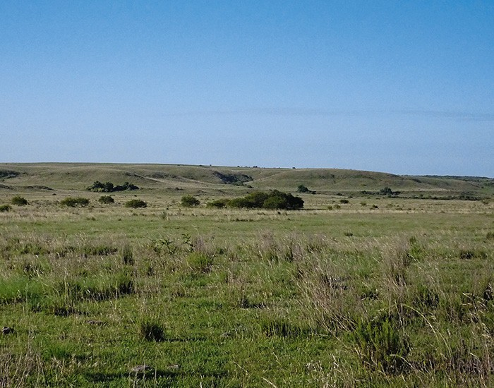O pampa é o paraíso da vegetação herbácea, com mais de 2.150 espécies já catalogadas (Foto: Eduardo Vélez Martin)