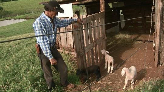Ovelha dá à luz trigêmeos no noroeste do Paraná