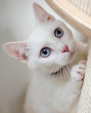 Aprenda a garantir o bem-estar do gato