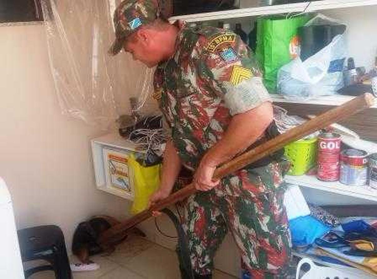 Tamanduá-mirim é resgatado dentro de casa Campo Grande