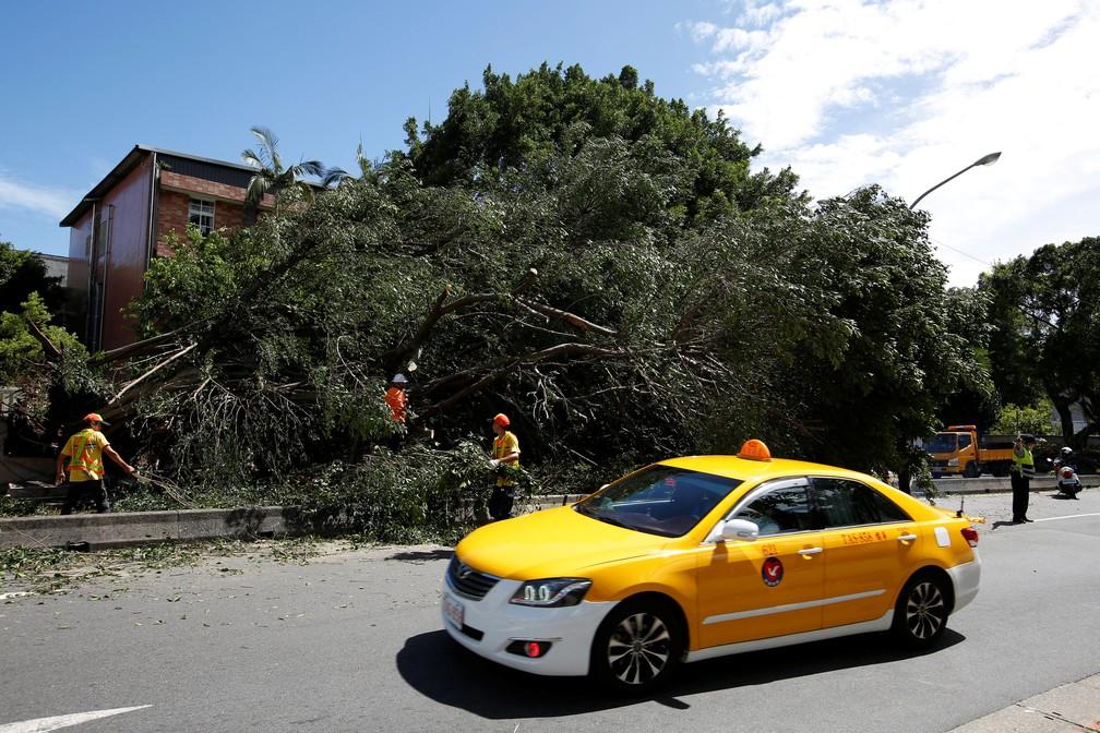 Árvore cai sobre uma casa após a passagem de tufão em Taipe, capital de Taiwan, neste domingo (30) (Foto: Reuters/Tyrone Siu)