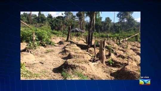 Operação apreende plantio de 25 mil pés de maconha no Maranhão