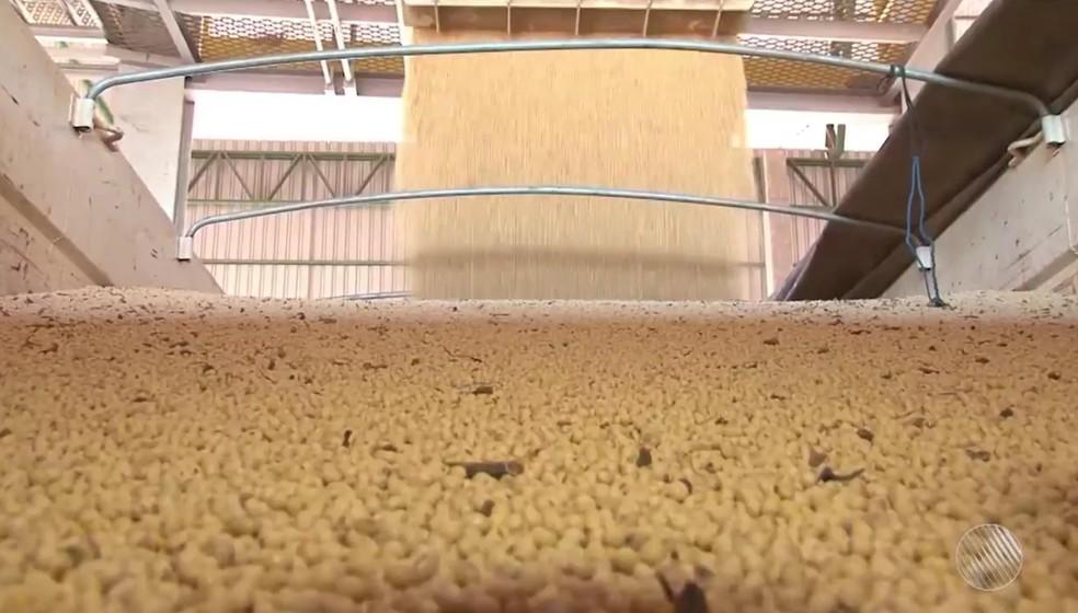 Soja é produto mais exportado da Bahia. — Foto: Reprodução/TV Oeste