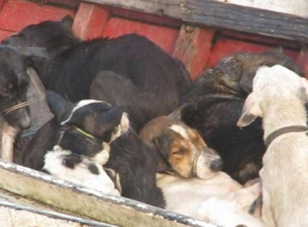 Cães foram capturados e levados de canoa até zona rural, alegou prefeito (Foto: Reprodução/Aragonei Bandeira)