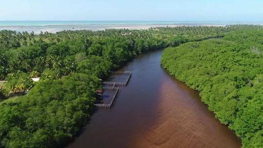 Óleo avança em 166 pontos do Nordeste e atinge estuário de peixes-bois, em Alagoas