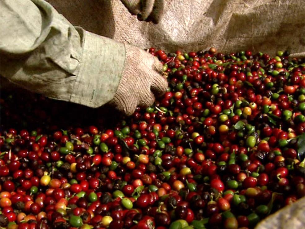 Saca de 60 quilos de café robusta em Jaru custa R$ 320,00 (Foto: Reprodução/EPTV)