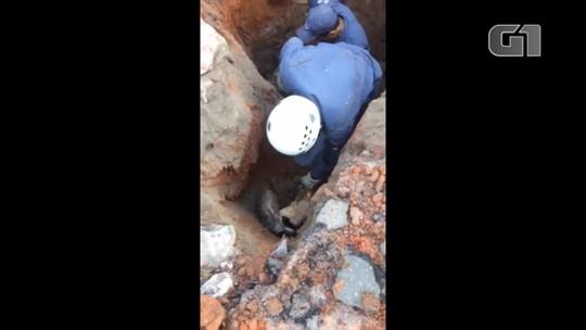 Bombeiros resgatam dois cachorros presos em bueiro; veja vídeo