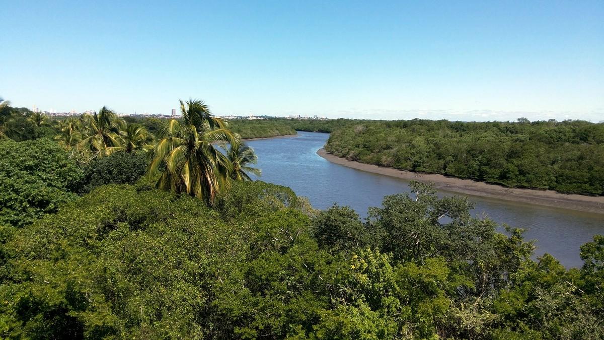 Paraíba perde mais de 66% da vegetação florestal em 15 anos, diz IBGE