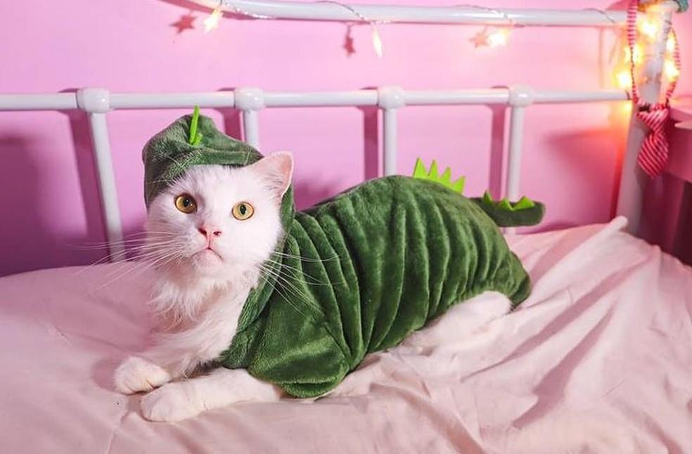 Gato Brossy Meowington tem mais de 50.000 seguidores — Foto: Reprodução/Instagram
