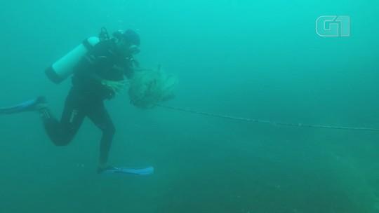Mergulhadores localizam rede de pesca 'fantasma' com dezenas de animais mortos na costa de SP; vídeo