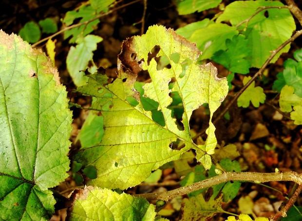 As pragas podem deixar as folhagens do jardim manchadas, esburacadas e até enrugadas (Foto: Pixabay / Creative Commons)
