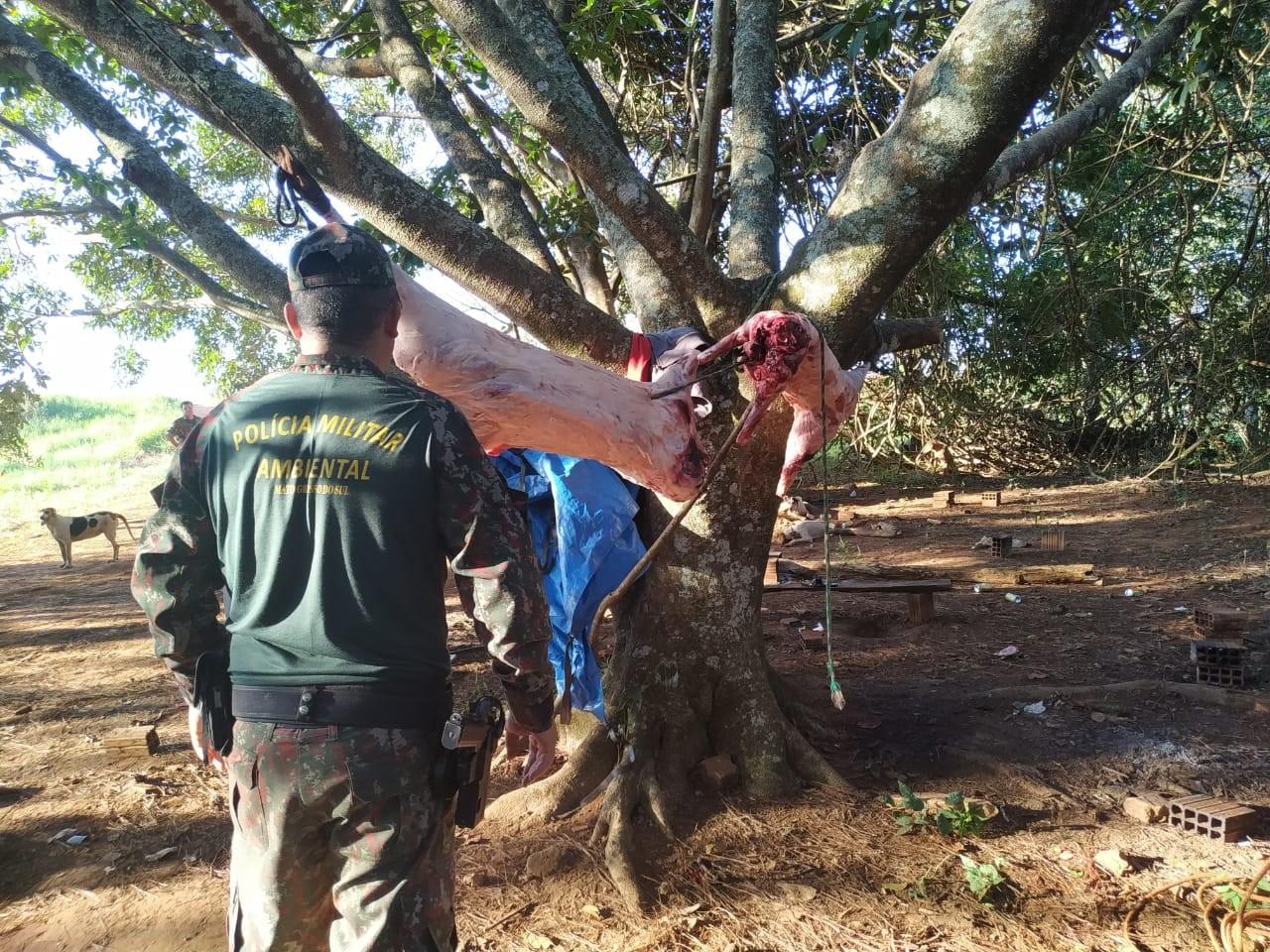 Polícia vai a acampamento e prende 5 ao flagrar javalis abatidos, armas e 18 cães em situação de maus-tratos