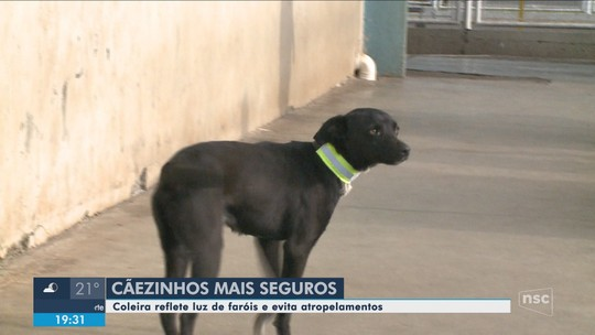 Cães de rua recebem coleiras reflexivas para evitar acidente de trânsito em Xanxerê
