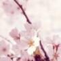 Papel de Parede: Blossom Tree