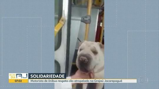 Motorista de ônibus salva cachorro atropelado e encontra o dono no RJ