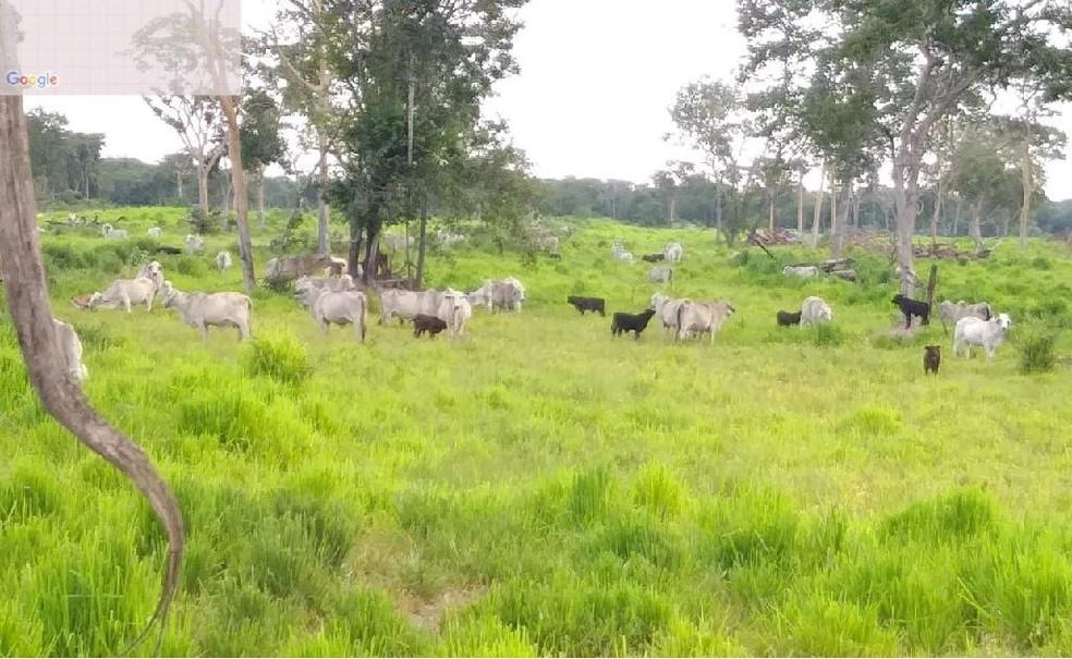 Fazenda localizada no Pantanal, localizada em Barão de Melgaço, foi alvo de operação — Foto: Sema/Assessoria