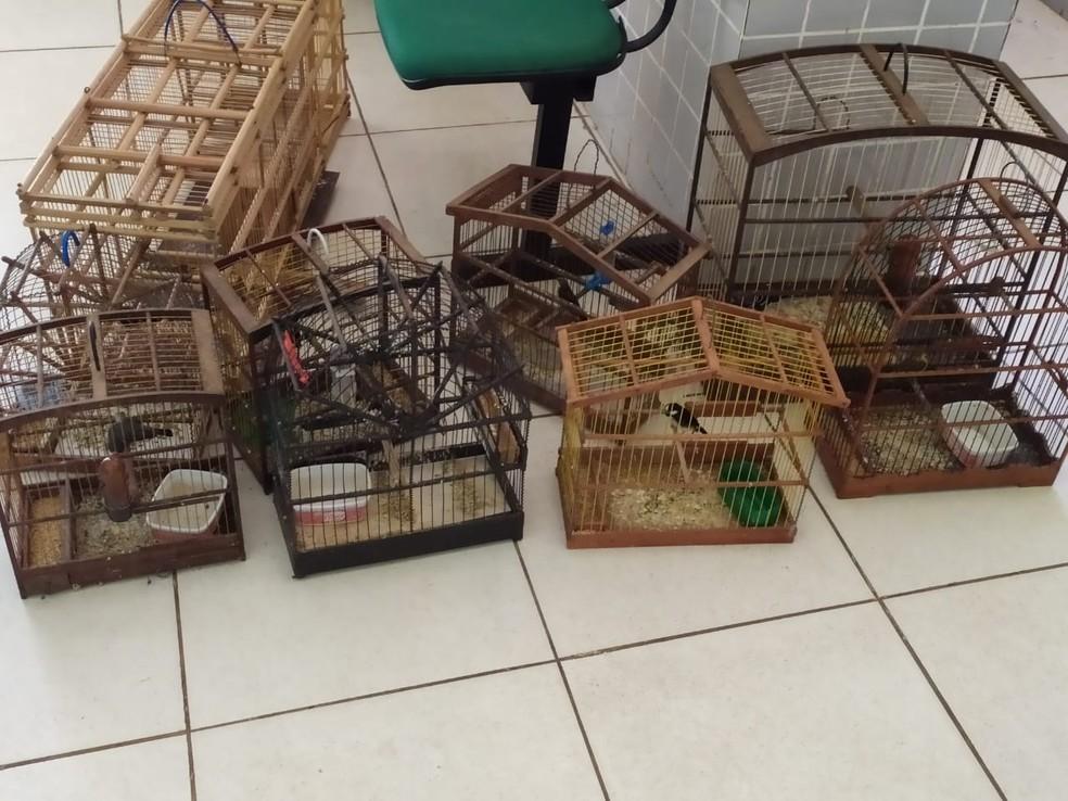 Pássaros presos em gaiolas apreendidos em Operação Divinos  — Foto: Divulgação/Polícia Civil