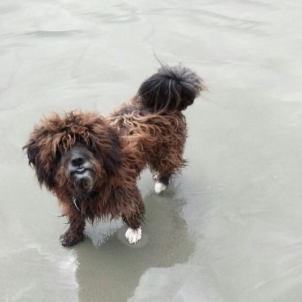 Cão Surfista