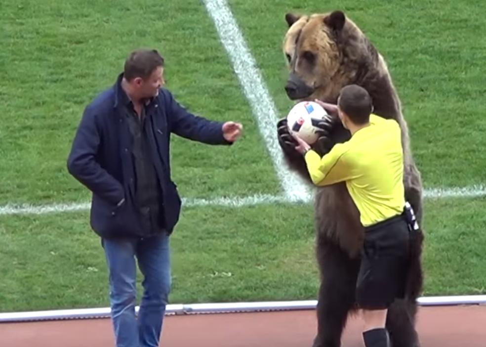 Urso entrega bola para árbitro ao fim de apresentação na Rússia (Foto: Reprodução/YouTube)