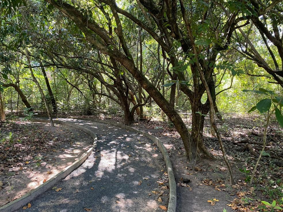 O bosque é uma das opções de passeio na capital de Roraima — Foto: Caíque Rodrigues/G1 RR
