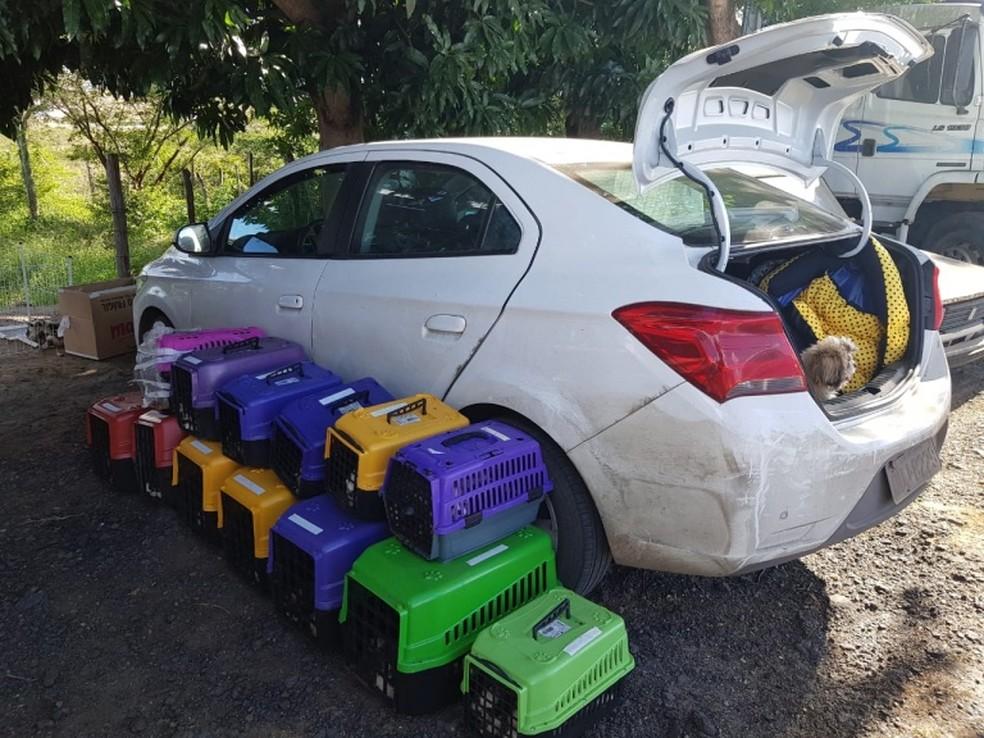 Carro onde cães eram transportados irregularmente na Bahia — Foto: Divulgação/PRF