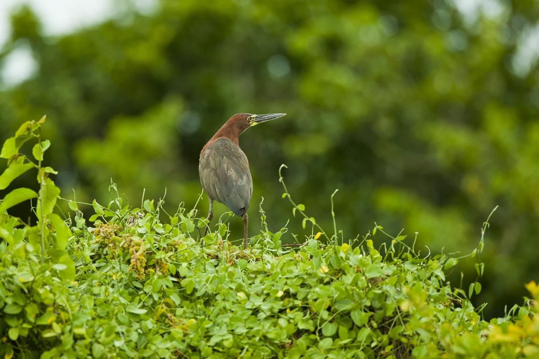 Plano de Manejo da Reserva Particular do Patrimônio Natural  Caruara foi aprovado pelo Inea