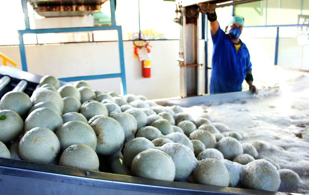 Melão é o produto potiguar líder de exportação (Foto: Anderson Barbosa/G1)