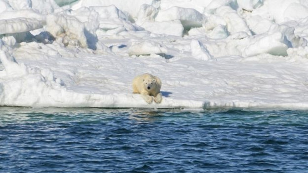 Cientistas acompanharam animais de 2014 a 2016 (Foto: BBC)
