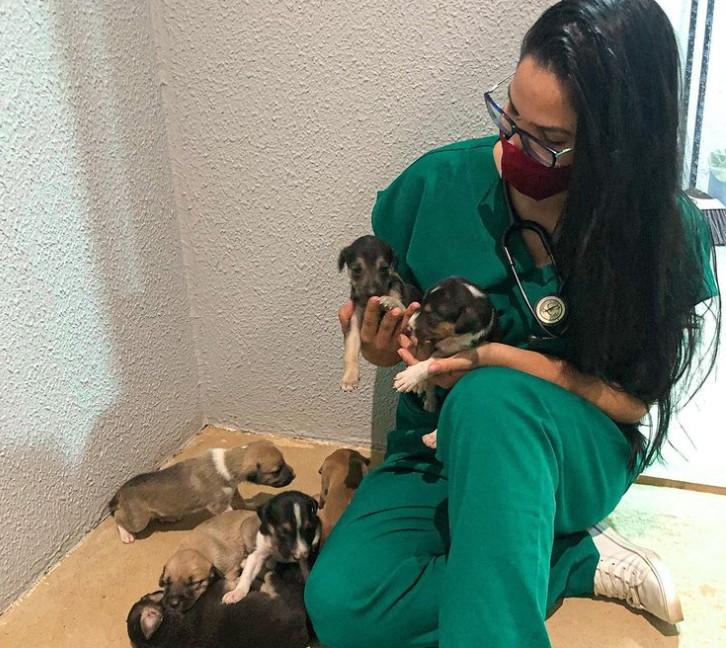 Estudante de medicina veterinária faz apelo após ter notebook com TCC furtado de carro no Ceará: 'Estou desesperada'
