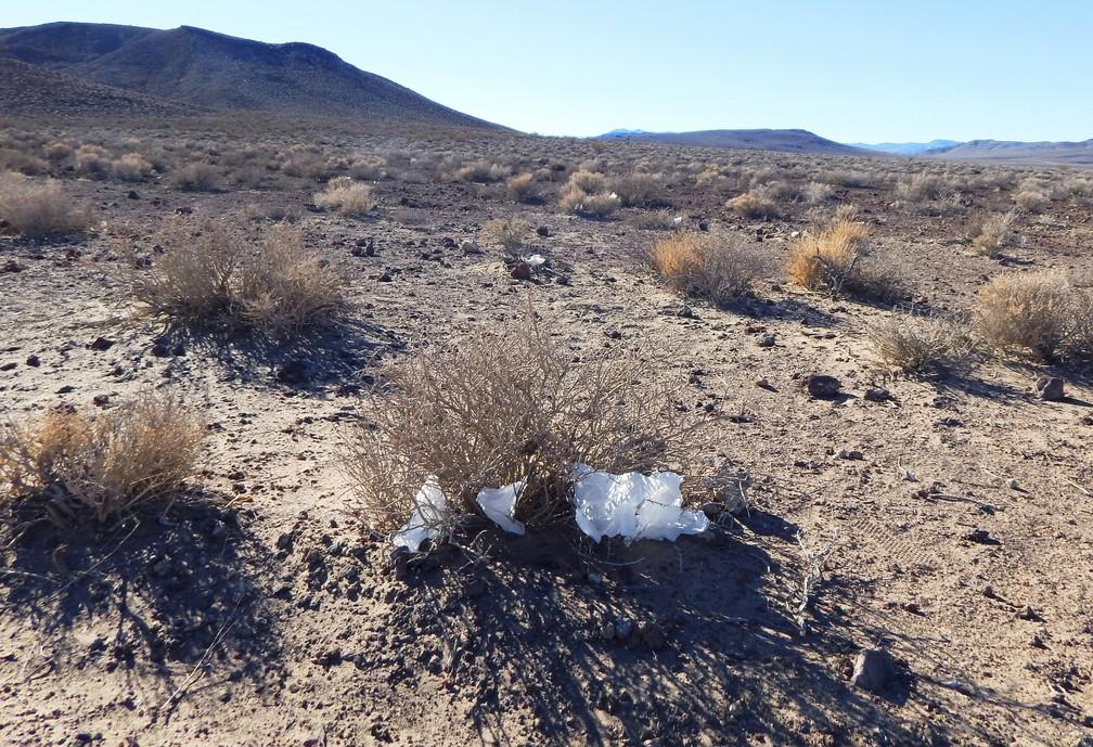 Papel higiênico jogado no chão do Parque Nacional do Vale da Morte, na Califórnia. Banheiros ficaram fechados no 'shutdown' — Foto: Eric Risberg/AP Photo