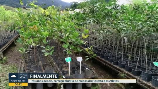 Mudas começam a ser plantadas na Floresta dos Atletas