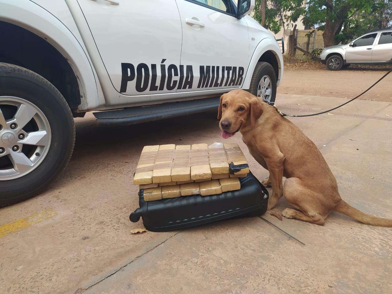Polícia faz vistoria com cão farejador em rodovia de MS e acha droga na mala de jovem com destino a Goiânia