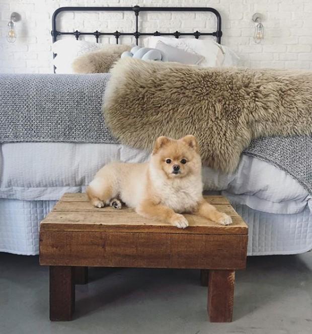 No estilo loft, o quarto do casal possui parede de tijolos à vista e cama com cabeceira de metal. O cãozinho Cookie posa para a foto (Foto: Instagram/ Reprodução)
