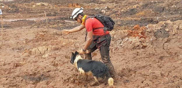 Desde o dia do rompimento da barragem de rejeitos, os cães farejadores já encontraram mais de 20 mortos (Foto: DIVULGAÇÃO/CBMG via BBC)