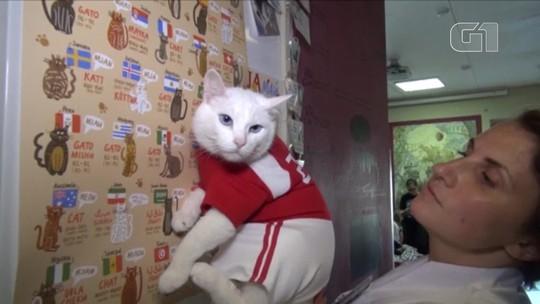 Gato 'vidente' prepara-se para dar palpites na Copa da Rússia
