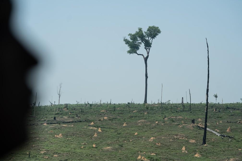 Pasto após queimada ao redor do território Karipuna, em Rondônia — Foto: Fábio Tito/G1